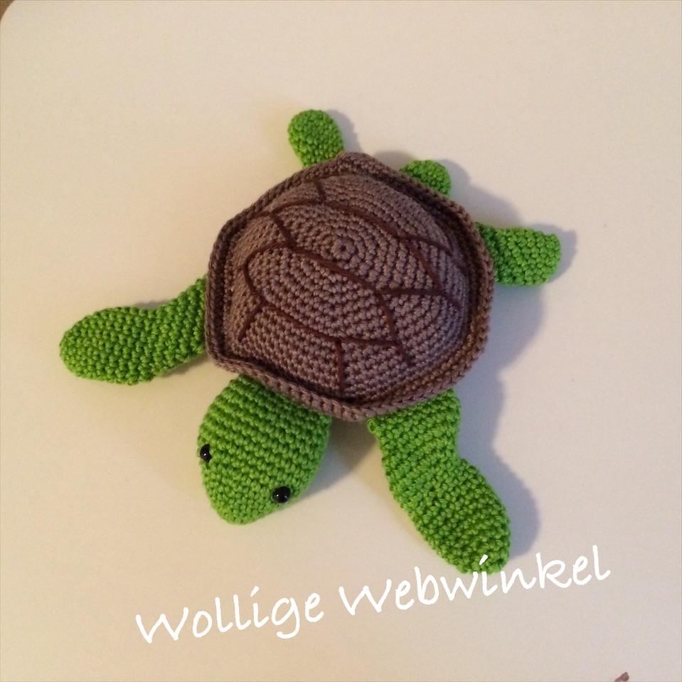 Zeeschildpadje 5