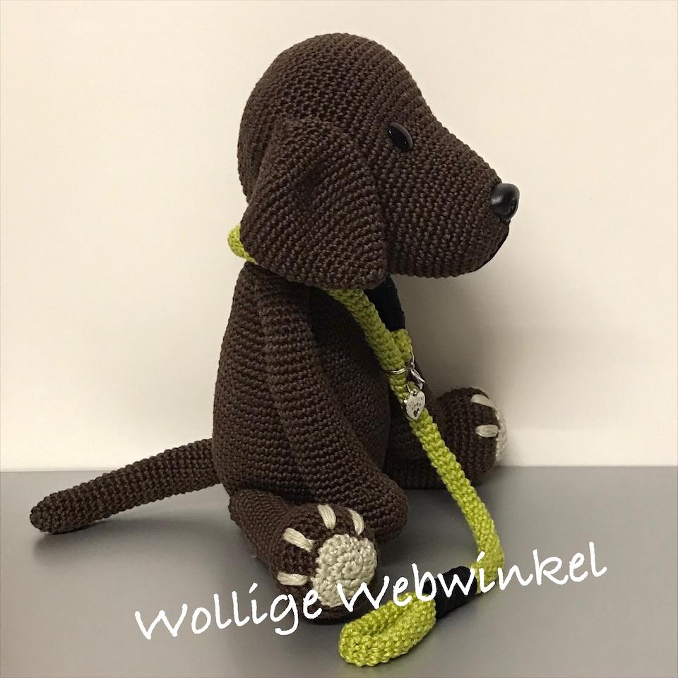 Labrador 1a